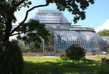 Il giardino botanico di Pietro il Grande a San Pietroburgo: storia, indirizzo e foto