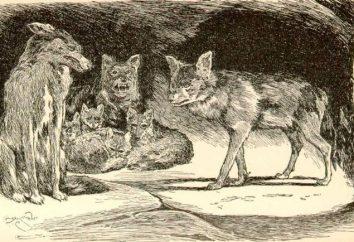 """Jaka była nazwa szakala """"Mowgli"""" i inne znaki robót"""