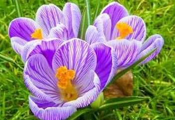 Co wieloletnia kwiaty można sadzić w ogrodzie jesienią?