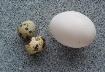 Podstawy zdrowej diety: Jajka wartości żywności