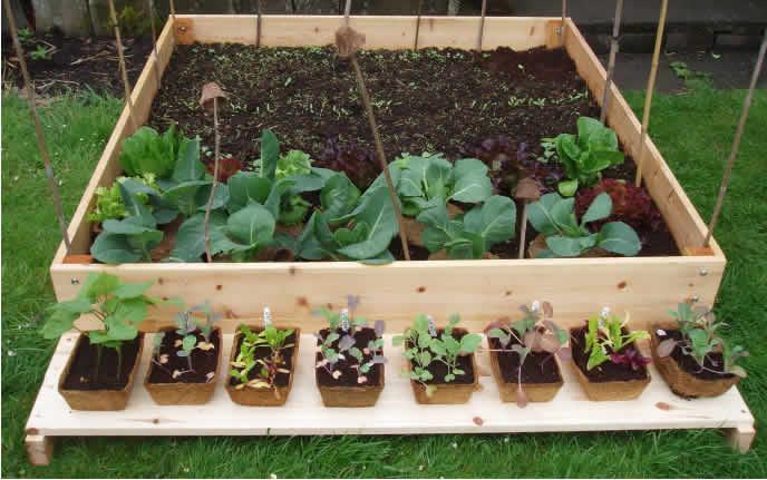 Quand semer les legumes le calendrier du potager de a z - Quand planter les legumes ...
