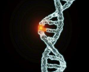 mémoire génétique – connexion du passé et du présent