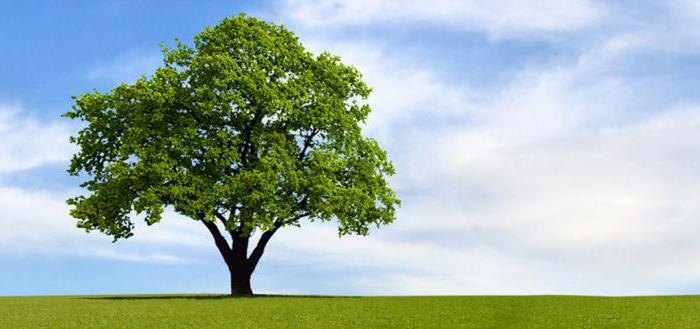 fällen von bäumen zeitraum