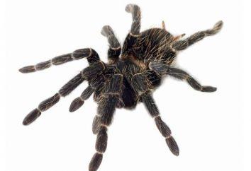 Sen: marzyłem o pająku – co to jest?