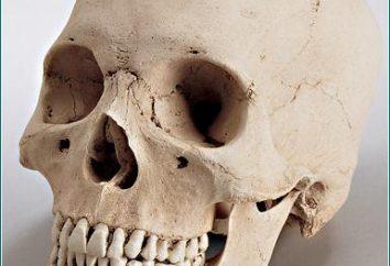 Podstawy czaszki. Co kości tworzą podstawy czaszki