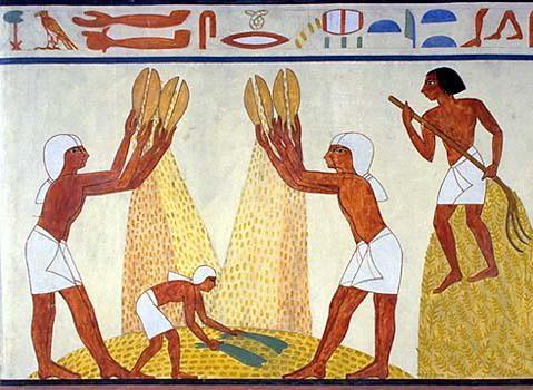 Alte Bauern In 196 Gypten Altes 196 Gypten Landwirtschaft