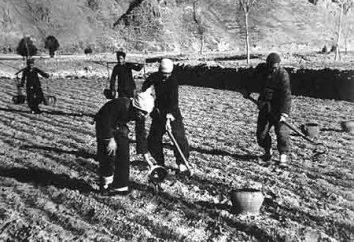 Canibalização – o que é isso? coletivização política na URSS: causas, processos e conseqüências