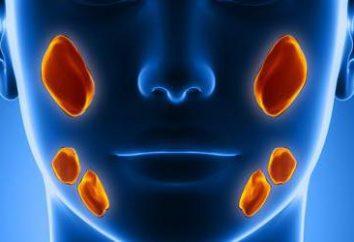 Estructura y función de las glándulas salivales