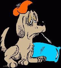 Warum Enteritis es bei Hunden und wie sie zu behandeln?