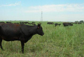 alimentation Herbe: rue de chèvre, le trèfle, la luzerne, mélilot. Propriétés utiles, la culture