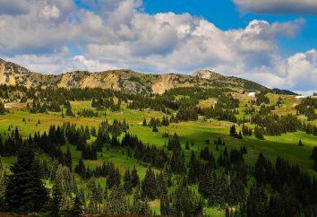 Prado alpino. Plantas Alpine Meadows