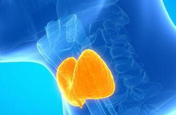Gonflement folliculaire de la glande thyroïde – Qu'est-ce que c'est? Caractéristiques cliniques et symptômes