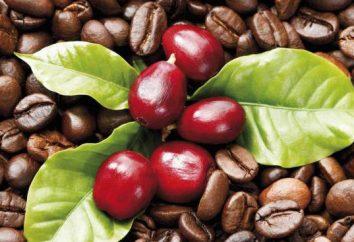 Kawa z pianką: recepty. Jak zaparzyć kawę w Turk na talerzu