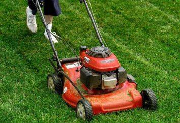 Jak wybrać trymer trawy: informacje praktyczne