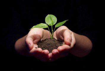 « Protéger l'environnement! »: Un essai sur un sujet pertinent et des recommandations à son écriture