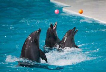 Rouler Dolphinarium à Irkoutsk