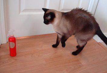 Wyświetlacz kot zapach