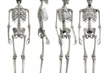 animali scheletro: caratteristiche generali e le foto