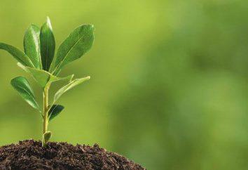 Roots -rast-, -rasch-, -ros-: utilisez habituellement