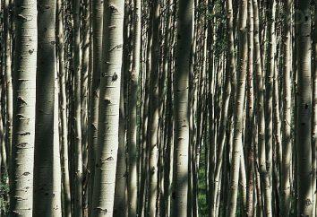 Les plantes les plus anciennes de la terre, qui survivent à ce jour