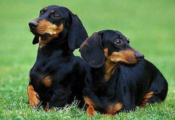 Les races les plus mauvais de chiens. évaluation