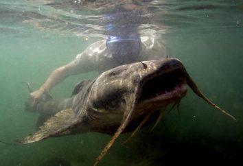 Les monstres des poissons d'eau profonde. Monstres de poissons de rivière