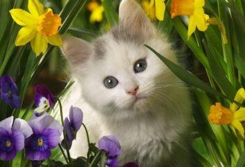 Jak można nazwać kota – najczęstsze pseudonimy