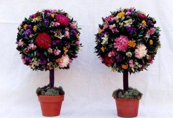Topiary am 8. März mit seinen Händen: Meisterkurse