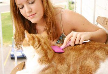 Co powinno być uwodzenie kota?