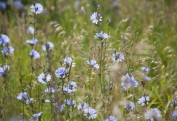 Rosja: świat roślin. Ochrona flory Rosji