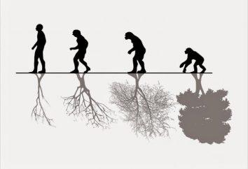 """""""¿Cómo proteger el medio ambiente"""" – un ensayo para los escolares de todas las edades"""