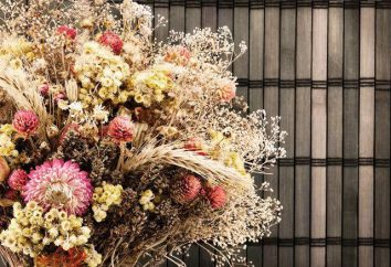 Le composizioni di fiori secchi per l'interno con le proprie mani. Mazzi di fiori secchi