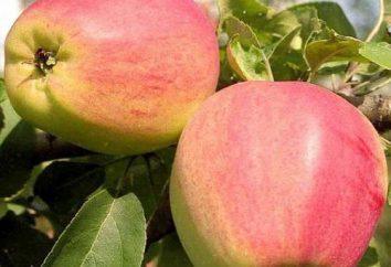 rêver pommier remplie de pommes