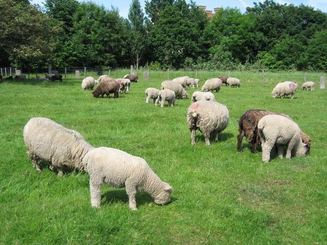 business plan allevamento ovino