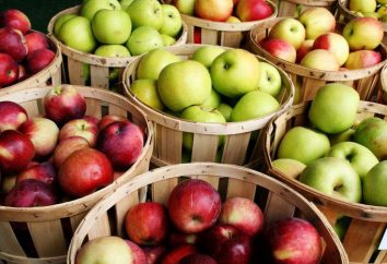 Alergia na jabłka u dzieci i dorosłych