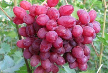 Uva Velez – descrizione della varietà