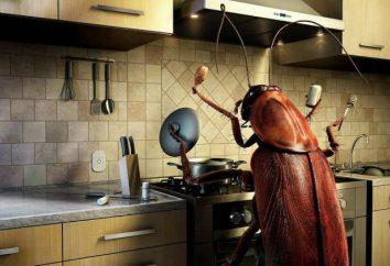 Ciò che compaiono scarafaggi in un appartamento? Il segno non è d'accordo con le norme di igiene