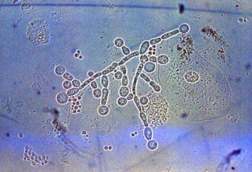 Drożdżopodobne grzyby z rodzaju Candida