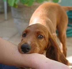 Im Traum wird er von einem Hund gebissen – was ist das?