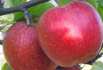 Apple ha Antey: descrizione e le caratteristiche di coltivazione