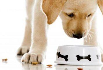 """Alimentos """"Orage"""" para perros – una dieta adecuada cada día"""