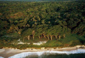 Gabun – ein Land in Zentralafrika: Beschreibung. natürliche Bedingungen