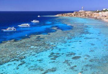 Poinciana Sharm Resort 4 * (Egipto / Sharm El Sheikh): fotos, precios y comentarios