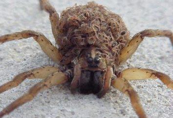 Vous voulez savoir ce grand rêve araignées lire horoscopes