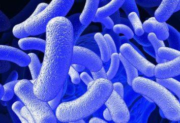 Toxoplasmosis en la sangre: anticuerpos IgG normales