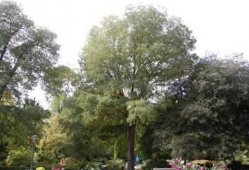 Miracle de la nature – un arbre de pierre