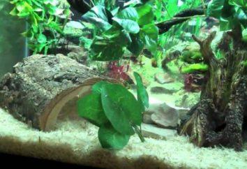 Pet węże: typy. Konserwacja i pielęgnacja