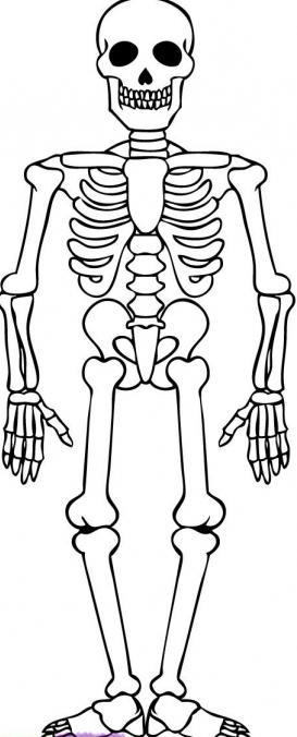 Les conseils de l 39 assistant apprendre comment dessiner un - Dessiner un squelette ...