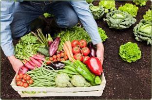 Wie Gemüse für den Winter frieren?