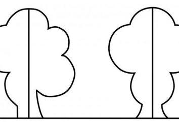 Qual è la simmetria in matematica? Definizione ed esempi